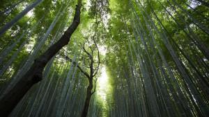 95-Bamboo-groen-bos-1920-Fotos-voor-Therapeuten